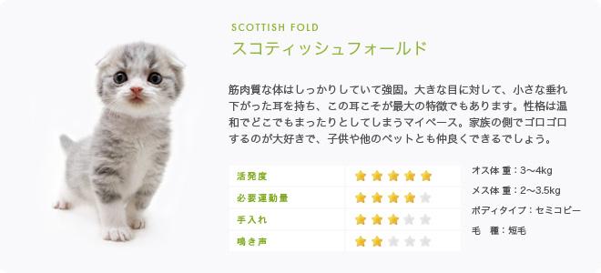 スコティッシュフォールドの画像 p1_30