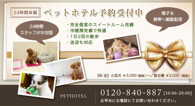 静岡のペットホテル