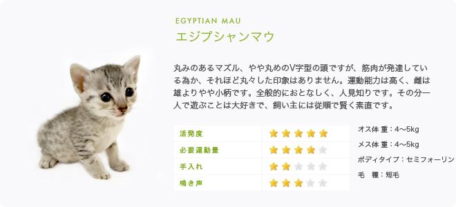 エジプシャンマウ